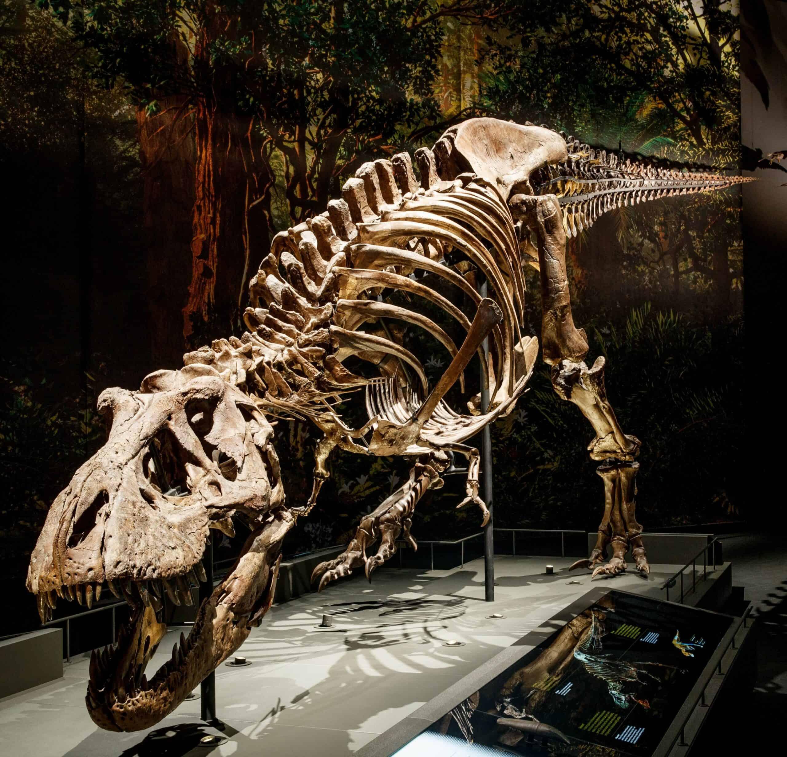 Dromen over een T. rex